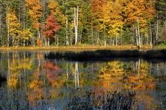 El follaje de otoño reflejó en el agua del pantano en New Hampshire Foto de archivo libre de regalías