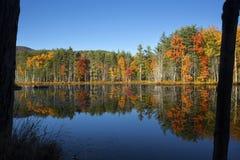 El follaje de otoño reflejó en el agua del pantano en New Hampshire Fotografía de archivo libre de regalías