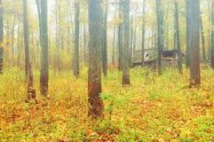 El follaje del amarillo del otoño de la niebla de la mañana de la arboleda del roble abandonó la choza en Fotos de archivo libres de regalías