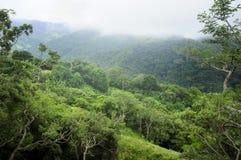 El follaje enorme, tropical debajo de una manta de la capa de nubes hace Monteverde un paisaje idílico imagen de archivo