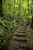 El follaje enorme, verde rodea las pistas de senderismo numerosas en bosque de la nube de Monteverde en Costa Rica foto de archivo libre de regalías