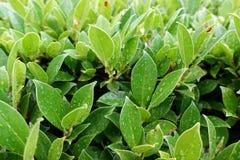 El follaje frondoso verde se va verde claro Imagen de archivo libre de regalías