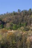 El follaje temprano de la primavera, lleva el valle, TN foto de archivo libre de regalías