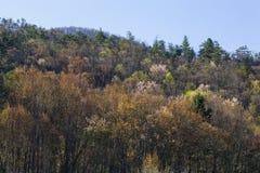 El follaje temprano de la primavera, lleva el valle, TN fotografía de archivo