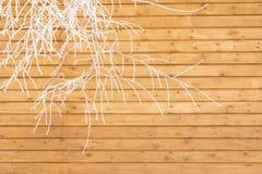 El fondo abstracto, abedul ramifica en escarcha en un fondo de la pared de madera marrón Imágenes de archivo libres de regalías