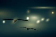 El fondo abstracto del color del vuelo de la gaviota del grupo Fotos de archivo