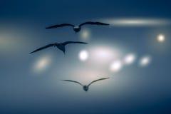 El fondo abstracto del color del vuelo de la gaviota del grupo Imagen de archivo libre de regalías
