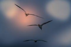 El fondo abstracto del color del vuelo de la gaviota del grupo Foto de archivo libre de regalías