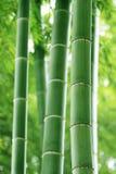 el fondo abstracto o fgreen el bosque de bambú Fotografía de archivo libre de regalías