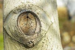 El fondo agradable del árbol de pino Foto de archivo