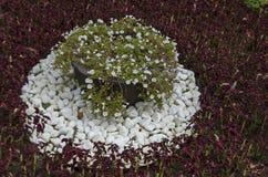 El fondo blanco del mármol del pedazo del adoquín y la flor en jardín en el monumento nacional de la arquitectura de paisaje parq Fotografía de archivo libre de regalías