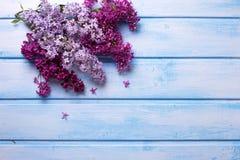 El fondo con la lila aromática fresca florece en plan de madera azul Fotos de archivo libres de regalías