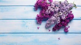 El fondo con la lila aromática fresca florece en plan de madera azul Fotografía de archivo