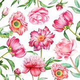 El fondo con la peonía roja y rosada de la acuarela, las flores subió, de la amapola y de la amarilis stock de ilustración