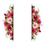 El fondo con las rosas rojas y rosadas y la fresia florece Vector EPS-10 Foto de archivo libre de regalías