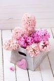 El fondo con los jacintos rosados frescos en caja y decorativos oyen Imagen de archivo libre de regalías