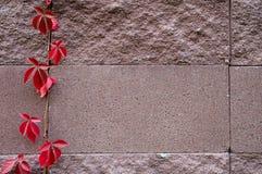 El fondo de adorna la superficie de la pared de piedra de la arena Foto de archivo