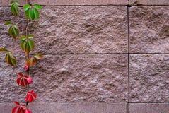 El fondo de adorna la superficie de la pared de piedra de la arena Fotos de archivo libres de regalías