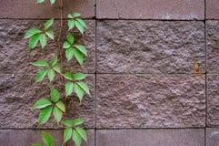 El fondo de adorna la superficie de la pared de piedra de la arena Imagenes de archivo