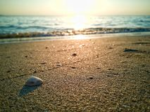 El fondo de la cáscara del mar en multa goden la arena con el copyspace en tiempo de la puesta del sol fotografía de archivo libre de regalías