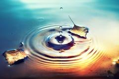 El fondo de la caída con el abedul seco deja la flotación en superficie del agua Imágenes de archivo libres de regalías