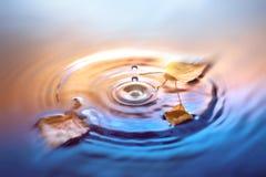 El fondo de la caída con el abedul seco deja la flotación en superficie del agua Imagen de archivo