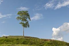 El fondo de la colina del cielo y del árbol Fotos de archivo libres de regalías
