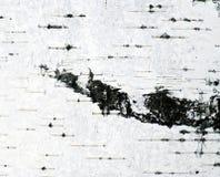 El fondo de la corteza de abedul Imágenes de archivo libres de regalías