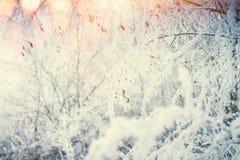 El fondo de la naturaleza del invierno con las plantas nevadas y las hierbas en el sol encienden el fondo Imagen de archivo