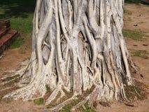 El fondo de la raíz del árbol imagen de archivo