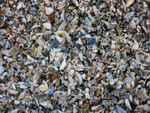 El fondo de las cáscaras del mar dispersó en la orilla Imagen de archivo libre de regalías