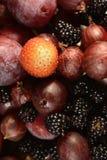 El fondo de las frutas y de las bayas del jardín Fotografía de archivo