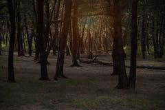 El fondo del bosque de la naturaleza con la reflexión de la luz del sol es brillante en la cima del árbol imagenes de archivo