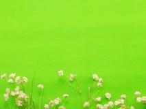 El fondo del espacio adorna con la flor secada Foto de archivo libre de regalías