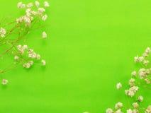 El fondo del espacio adorna con la flor secada Imagen de archivo
