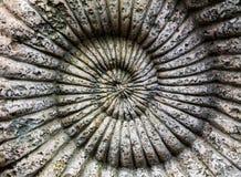 El fondo del fósil de la amonita en piedra Imagenes de archivo