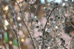 El fondo del invierno con hielo adornó ramas Fotos de archivo libres de regalías