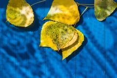 El fondo del otoño sale de la tabla azul amarilla Fotografía de archivo