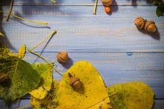 El fondo del otoño sale de la tabla del azul de las frutas Foto de archivo libre de regalías