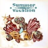 El fondo del verano del mar con vector detalló las cáscaras para el diseño Foto de archivo
