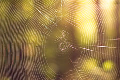 El fondo del web de araña fotos de archivo