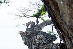 El fondo es un miembro de árbol foto de archivo libre de regalías
