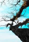 El fondo es una rama de un árbol grande fotos de archivo libres de regalías