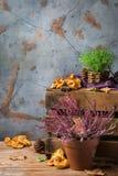 El fondo festivo decorativo de la acción de gracias del otoño de la caída con azafrán lechoso prolifera rápidamente Foto de archivo libre de regalías