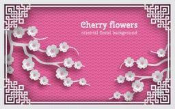 El fondo floral con el marco oriental en el contexto y la cereza rosados del modelo florece Imagenes de archivo