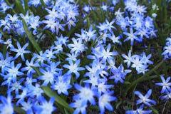 El fondo floral de las primeras flores de la primavera se cierra para arriba fotografía de archivo