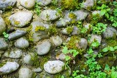 el fondo Gris-marrón, texturiza la albañilería de piedra con la hierba Fotografía de archivo libre de regalías