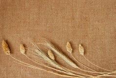 El fondo hecho por la arpillera y los cereales Fotos de archivo