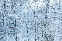El fondo hermoso blanco del invierno de las ramas de los árboles en el bosque o en el parque debajo de la nieve fotos de archivo