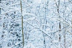 El fondo hermoso blanco del invierno de las ramas de los árboles en el bosque o en el parque debajo de la nieve fotografía de archivo